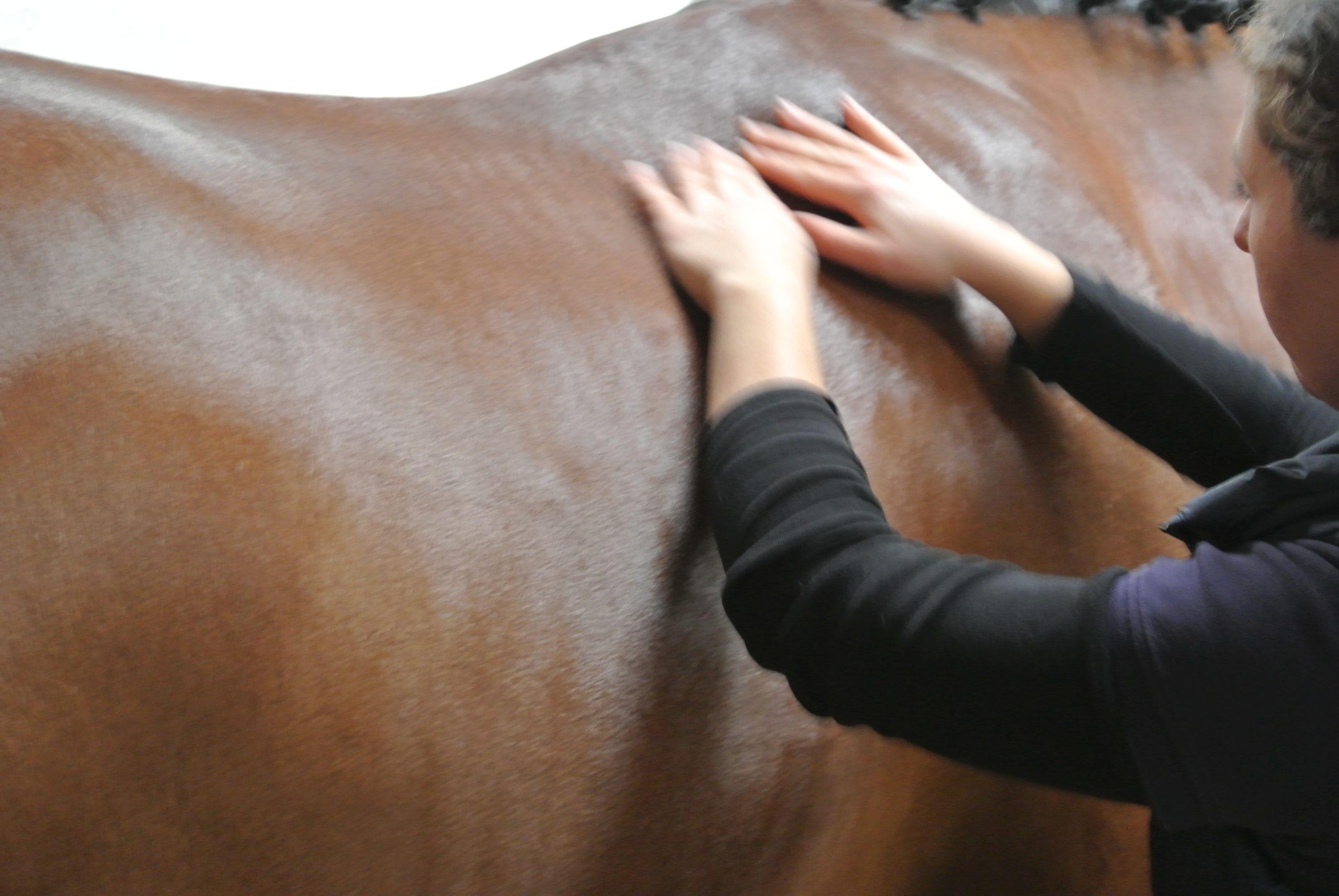 Emeline-moutiez-horsecare-algothérapie-massothérapie-shiatsu-lisieux-normandie-ile-de-france-massage-chevaux-chien-ane (26)